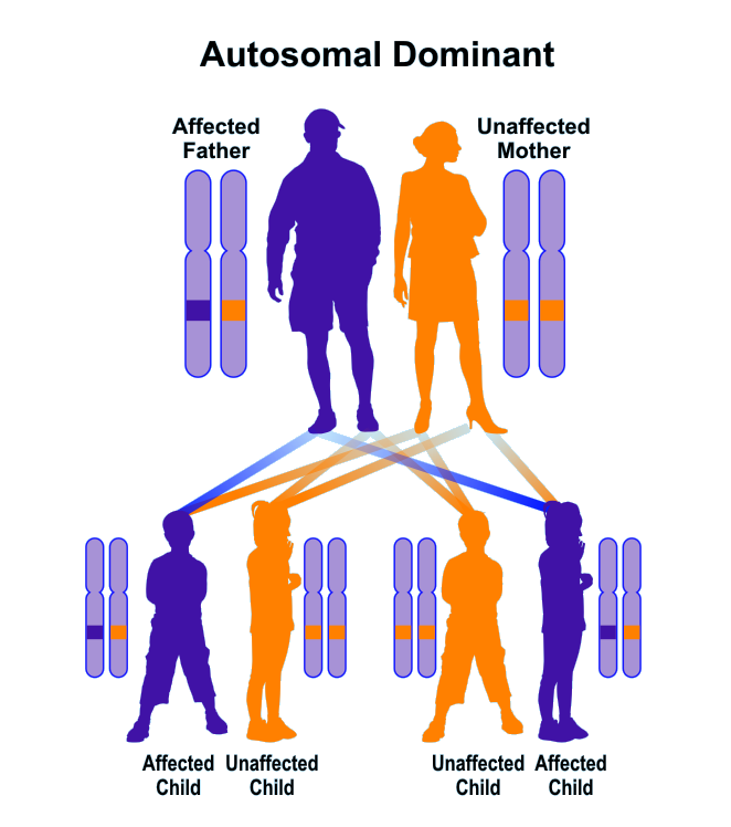 Sample pedigree of autosomal dominant inheritance