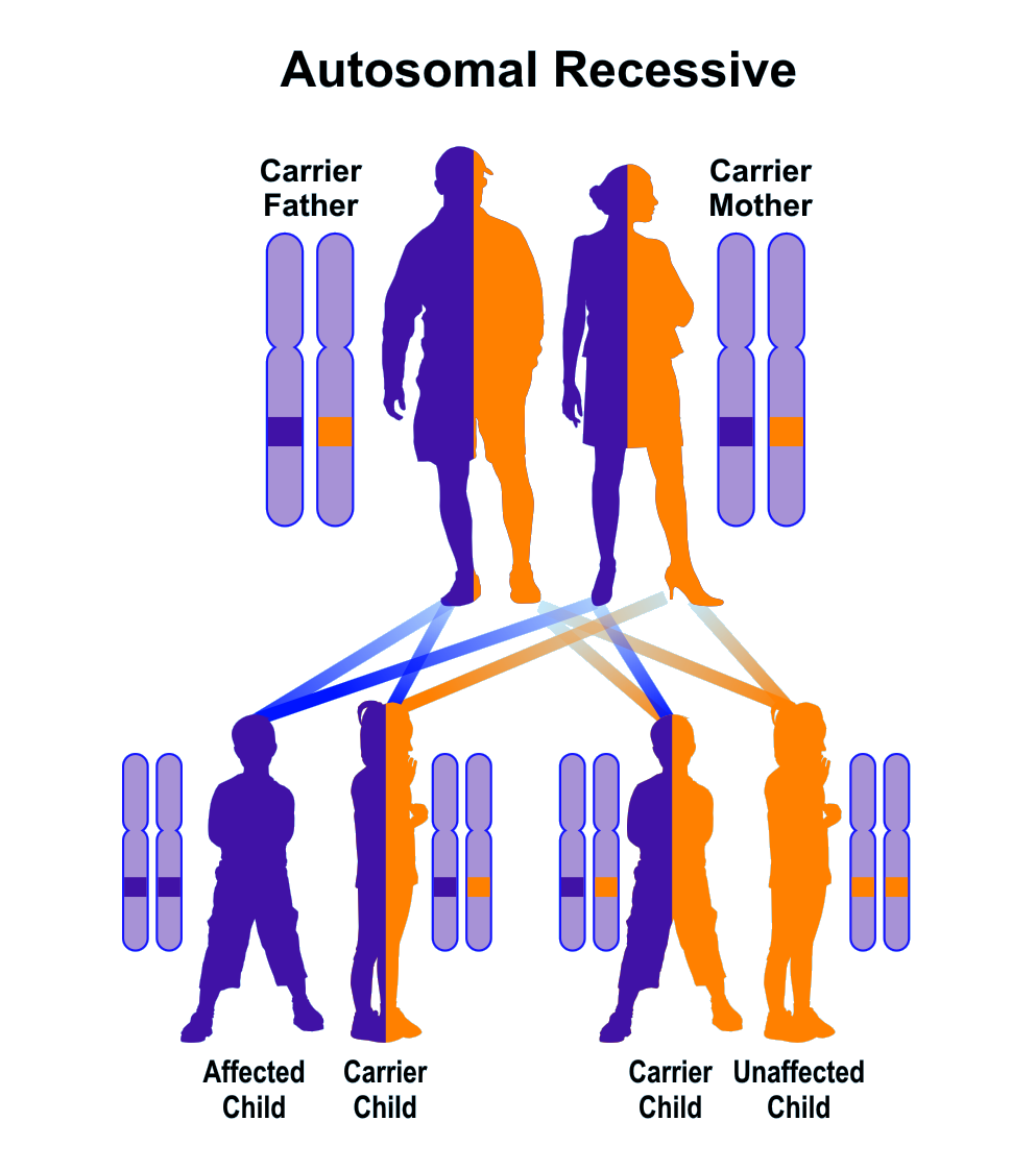 Sample pedigree of autosomal recessive inheritance
