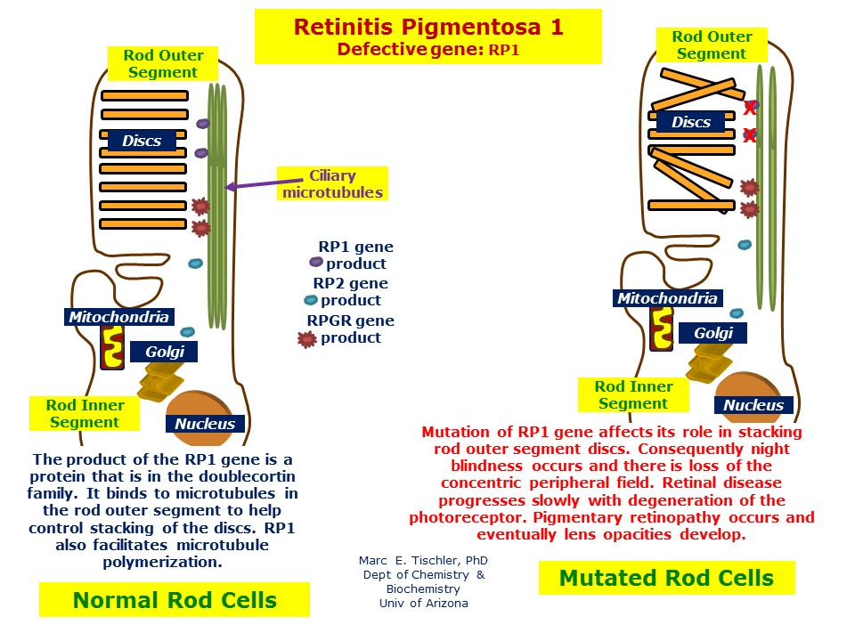 dating site for retinitis pigmentosa