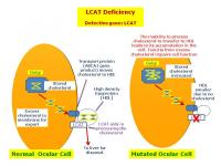 LCAT codes for an extracellular enzyme important for esterifiication of cholesterol.